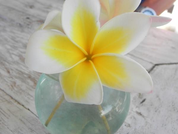 lotus bloem puur lonneke